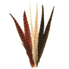 Ringneck Pheseant Tail Feathers, dyed