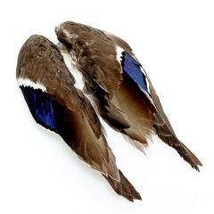 Stockentenflügel - Mallard Duck Wings