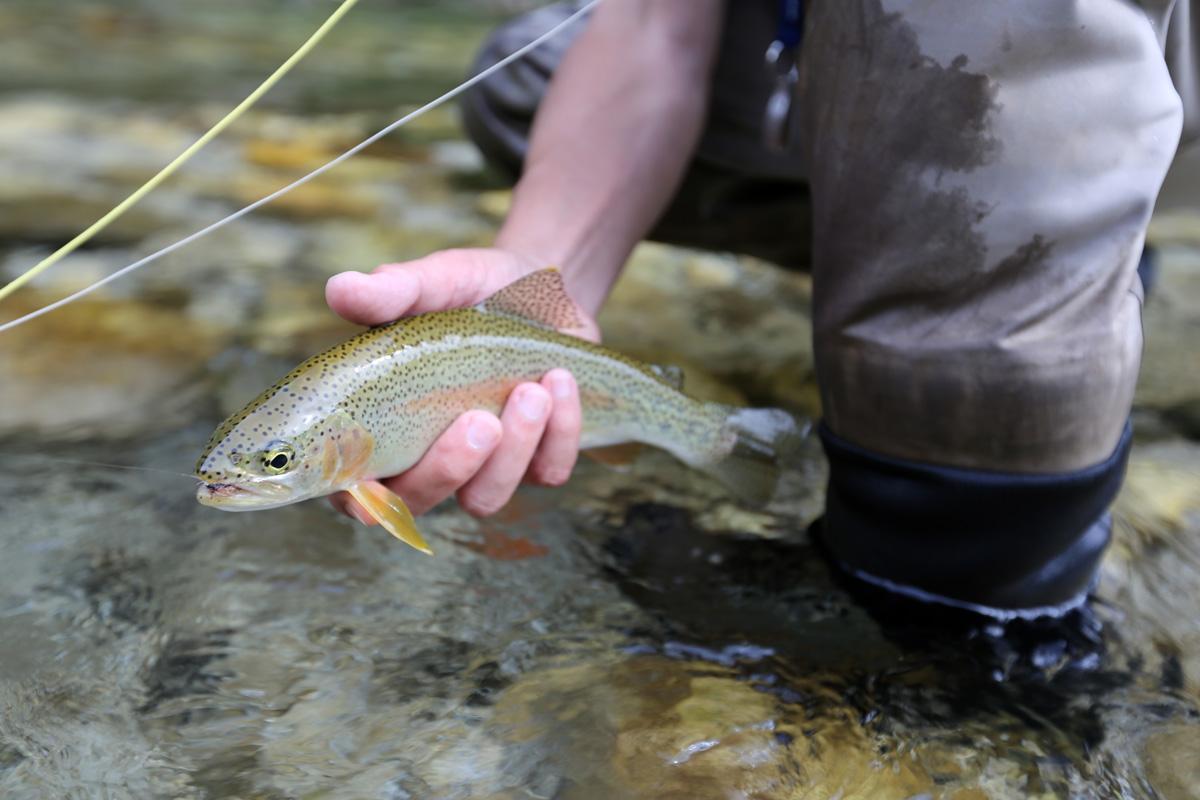 Fliegenfischen an der Savinja / Slowenien