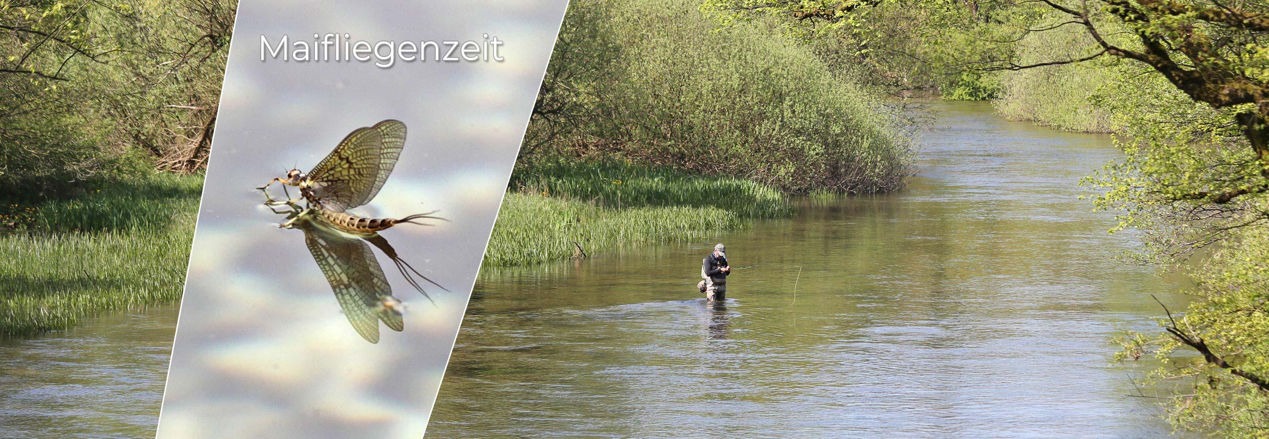 Maifliegenzeit Fliegenfischen
