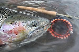 Jurassic Lake - Fliegenfischen auf große Regenbogenforellen